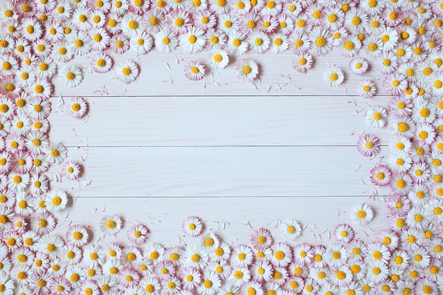 Обои цветы, доски, хризантемы картинки на рабочий стол, раздел цветы - скачать