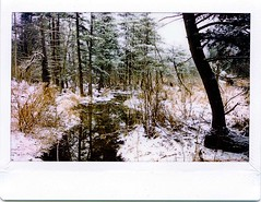 (babireley) Tags: instaxwide300 fujifilminstaxwide instantfilm winter snow pottercounty pa pawilds pottercountypa