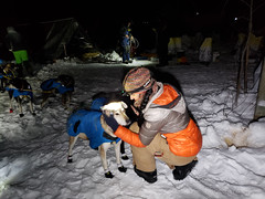 20190206_235726.jpg (Roshine Photography) Tags: huskies winter environmental dogcare 36hourrestart yukonquest dogyard dawsoncity yukonterritory snow yukon canada ca