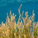 Grass by the sea                  XOKA0199bs