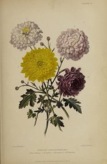 n778_w1150 (BioDivLibrary) Tags: gardening horticulture usdepartmentofagriculturenationalagriculturallibrary bhl:page=57724375 dc:identifier=httpsbiodiversitylibraryorgpage57724375 artist:name=augustainneswithers augustainneswithers hernaturalhistory