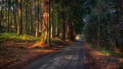 Magic (Lee Harris Photography) Tags: landscape forest wood nature light shade shadow tree trees road foliage colourful nikon orange beauty