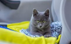 Kika (11) (Vlado Ferenčić) Tags: kittens kika animals animalplanet cats zagorje nikkor8518 nikond600