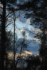 Framed Sky. (dccradio) Tags: lumberton nc northcarolina robesoncounty outdoor outdoors outside nature natural sky tree trees woods wooded forest march monday spring springtime evening mondayevening goodevening nikon d40 dslr cloud clouds