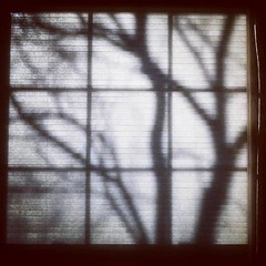 Blind, Shadows, and Window (Robert_Brown [bracketed]) Tags: silvercity robertbrown thesilvercityphotographer instagram square format shadows window blind shade evening abstract blackandwhite tree newmexico southwest samsungs8 s8 samsung cellphone cell phone