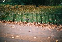 Squirrel (goodfella2459) Tags: nikonf4 afnikkor50mmf14dlens fujifilmc200 35mm c41 film colour analog animal squirrel london kensingtongardens park gardens fence leaves manilovefilm