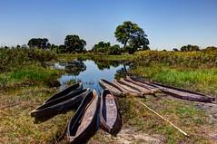 Mokoros (Jhaví) Tags: mokoro mekoro okavango delta botsuana wild traditions boat barca canoa nature africa