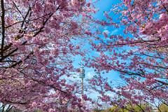Olympiapark München - Olympic Tower Munich - Spring (Muenocchio) Tags: frühling munich münchen olympiapark spring
