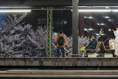 Suginami, Tokyo (MSM_K_JP) Tags: sony contax zeiss planar suginami tokyo japan cherry blossoms tree flower railway station platform people waiting a6300 night 50mm