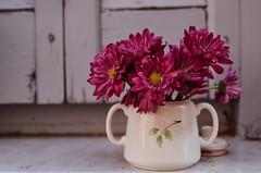 Azucarero devenido en florero... (Irene Carbonell) Tags: vintagelove vintage flores flowers floral naturaleza nature 35mm nikon