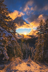 Draped In Snow (Travis Rhoads) Tags: 2018 sonyalphaa9ilce9 sony1635f28gm reallyrightstuff bh55 rrspcl01 tvc33 clouds goldenhour landscapephotography mountains nationalpark nikcollectionbygoogle sunstar sunset textures thegoldenhour trees copyright2018 travisrhoadsphotography snow washington mtrainiernationalpark