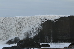 IMG_0543 (monika.carrie) Tags: monikacarrie wildlife scotland aberdeen waves