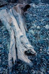 Blue like a shoe (toniertl) Tags: bladon blenheim infrared tertlphotoxoncouk winter cold abandoned lost child leaves trunk log