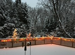 during last weekend's snowfall (karma (Karen)) Tags: baltimore maryland backyard fences trees lights snowfall hff