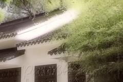 42677683244_fa0b13e721_b (Kingston4 Landscape) Tags: suzhou light rain fujifilm xt1 painterly feel m42 helios442 258 manual lens colors old bokeh bright watercolor painting
