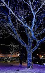 Tree in blue (Pedro1742) Tags: tree blue lights night holidays