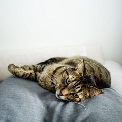 DSC03342 (iocatco) Tags: cat kitten cats sony a7