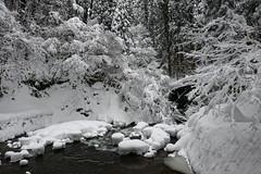祓川神橋 (小川 Ogawasan) Tags: japan japon giappone yamagata winter snow haguro 祓川 神橋 羽黒山 出羽神社 山形県