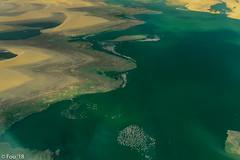 _FOU7606-Enhanced.jpg (Murray Foubister) Tags: 2018 gadventures spring desert travel namibia2007 birds aerial avian africa