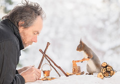 Red squirrel holding a axe and a person is making fire (Geert Weggen) Tags: squirrel camera red animal backgrounds bright cheerful close color concepts conservation culinary cute damage day earth environment environmental equipment love valentine flower winter snow photo model person human man dianths fire wood axe fireplace matches burd cooking camping makecamp bispgården jämtland sweden geert weggen hardeko ragunda
