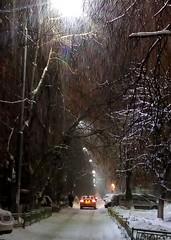 Snowstorm / Метель (msergeevna) Tags: метель снегопад снег зима winter winterbeauty snowstorm talvi lumi light evening ilta