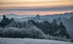 still dark and frozen (Wöwwesch) Tags: morning frozen trees hills winter cold landscape blue hour