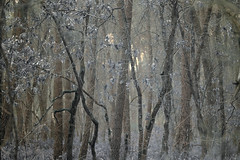 Forêt (david49100) Tags: 2019 90mm février maineetloire seichessurleloir tamron90mm arbres d5100 nikon nikond5100 tamron trees
