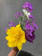 bouquet-pour-Myriam© (alexandrarougeron) Tags: photo alexandra rougeron fleur plante nature flickr