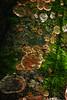 Fungos e líquens em um tronco de árvore (Cleber Aurélio) Tags: fungo líquen tronco árvore foongus lichen trunk tree