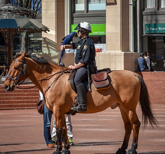 Policeman and parrot (maytag97) Tags: portlanddowntown portland downtown maytag97 nikon d750 oregon city outdoor outside sunny sunshine police officer horse equine parrot bird people mounted blue