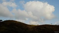 果ての旅路に (atacamaki) Tags: xt2 23mm f14 xf fujifilm jpeg撮って出し atacamaki shimane okinoshima nishinoshima 西ノ島 隠岐 馬 うたうたい交響曲 sky nature animal horse island view 日本 島根 隠岐諸島