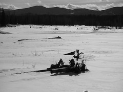 Driftwood Alberta Foothills (Mr. Happy Face - Peace :)) Tags: htmt trees forest snow sun cloud sky trail skiing outdoors activity winter nature hiking art2019 black white bw
