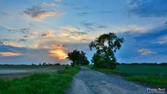 Feel the moment (Szymon Karkowski) Tags: outdoor landscape nature tree trees meadow field fields road sky clouds sunset sun spring silesian voivodeship gliwice poland nikon d7100