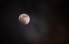 Super Blood Wolf Moon (Tony Webster) Tags: minnesota superbloodwolfmoon tonywebster eclipse lunareclipse moon superblood supermoon wolfmoon eastlake unitedstatesofamerica us