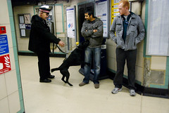 """071129_DogDrugCheck_011 (hoffman) Tags: authority check constabulary control cop detection detectives drug enforcement horizontal lawandorder metropolitan officers plainclothes police policeman search security snifferdog sniffing stop testing uniform davidhoffman wwwhoffmanphotoscom london uk davidhoffmanphotolibrary socialissues reportage stockphotos""""stock photostock photography"""" stockphotographs""""documentarywwwhoffmanphotoscom copyright"""