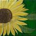 ''Sunflower Sunshine'' by Lynette A, acrylic, $35.00