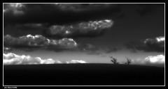 Duo..... (faurejm29) Tags: faurejm29 canon sigma sky ciel campagne paysage nature nb landscape monochrome