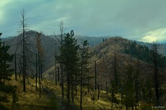 After the Fire (Gay Foster) Tags: fires colorado mountains burned trees