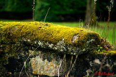 Mossy Wall (red.richard) Tags: moss wall decay green close colour scotland nikon d800