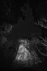 Sword in the night (小川 Ogawasan) Tags: japan japon oita 不動明王 熊野磨崖仏 豊後高田市 大分県 fudōmyōō kumano magaibutsu bungotakada 鎌倉時代 night stars light f28 14mm 30s 3200iso bw swordofwisdom
