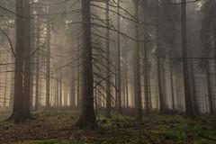 forest series #250 (Stefan A. Schmidt) Tags: warstein nordrheinwestfalen deutschland de forest tree pine trees fog misty mist gloomy