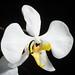 [Java, Indonesia]  Phalaenopsis amabilis (Java type) (L.) Blume, Bijdr. Fl. Ned. Ind.: 294 (1825)