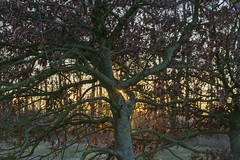 _IMG4420 (Hendricus M. de Regt) Tags: the netherlands gelderland natuur nature landscape grass bos forest trees zonsopkomst sunset swamp nederland veluwe landschap gras water bomen moeras