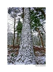 Winter Impressionen (mikael.heinrichson) Tags: mikaelheinrichson panasonic dmcfz1000 fz1000 winter schnee