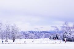 Beauty in Snowpocalypse