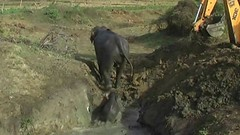 A mother elephant and a baby elephant saved from drowning. People are awesome! (I_Am A Kid) Tags: animal safari kids video elephant for i am a kid channel lesson