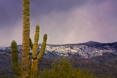 Yin Yang (oybay©) Tags: lakepleasant arizona winter cactus mountains snow sky outdoor mountain landscape hill peak
