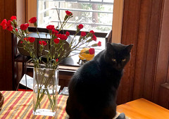 Midnight (greenelent) Tags: cat blackcat flowers snow window brooklyn nyc 365 photoaday
