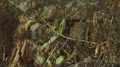 Bildschichten Am Fluss 22 Wieltsee (wos---art) Tags: bildschichten fluss river wasser water unterwasser underwater gestrüpp bäume baum verbrand ausgehöhlt rus äste ufer
