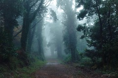 Forest path (jorgeverdasca) Tags: dark mist fog goth landscape path trees ivy nature woodland forest sintra portugal